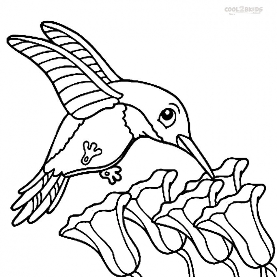 coloring pictures of hummingbirds get this printable hummingbird coloring pages 58425 pictures of coloring hummingbirds