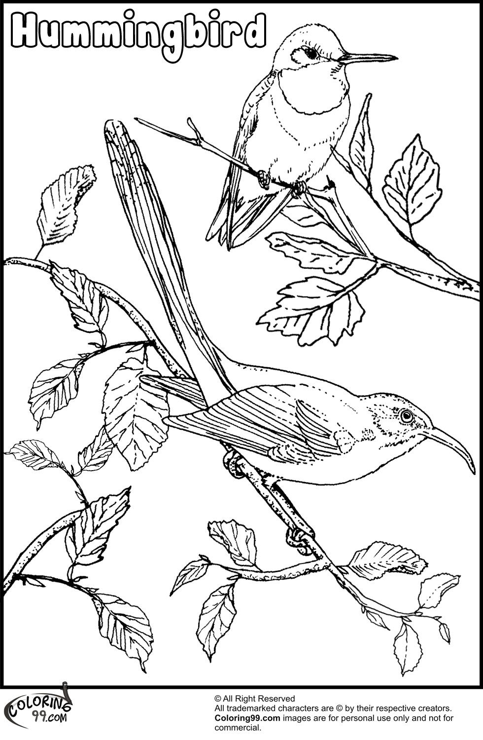 coloring pictures of hummingbirds humming bird coloring page coloring home of coloring pictures hummingbirds