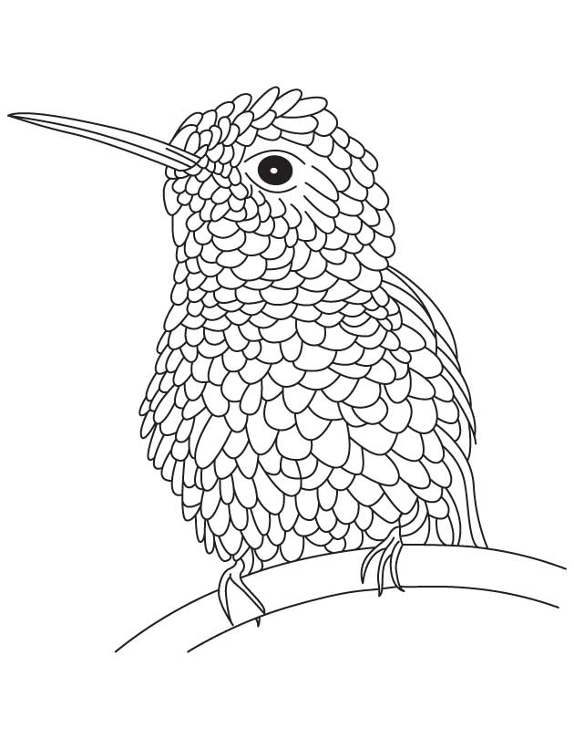 coloring pictures of hummingbirds hummingbird coloring page coloring home hummingbirds coloring of pictures
