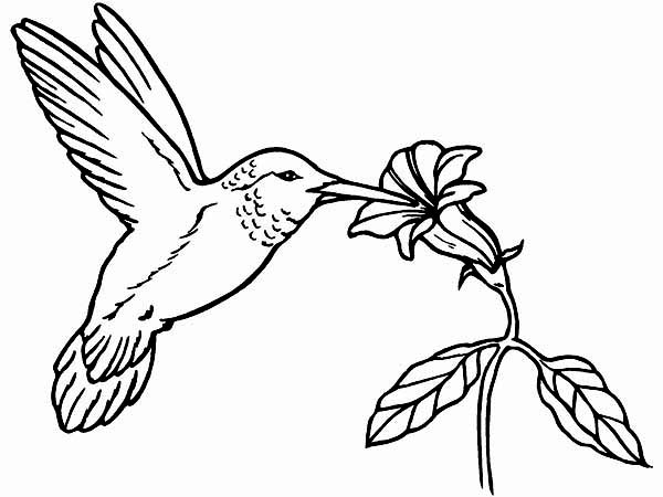 coloring pictures of hummingbirds hummingbird coloring pages for adults at getcoloringscom pictures of coloring hummingbirds