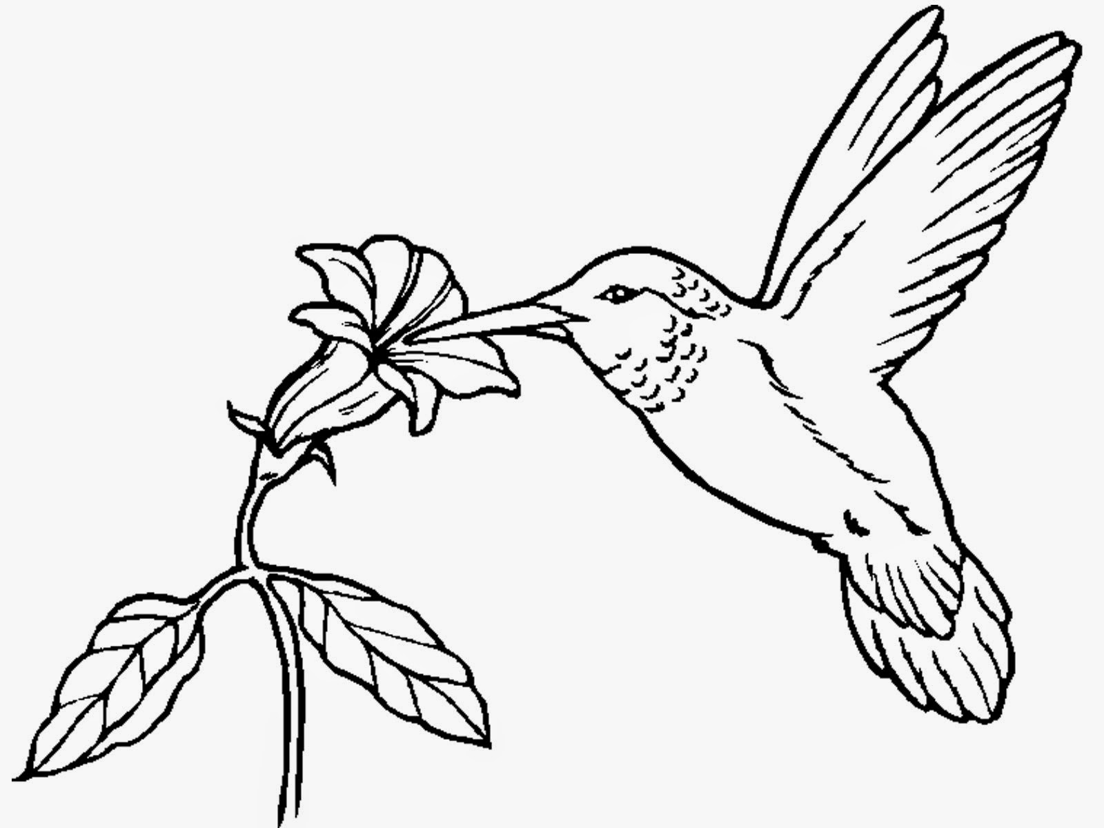 coloring pictures of hummingbirds hummingbird coloring pages pictures coloring of hummingbirds