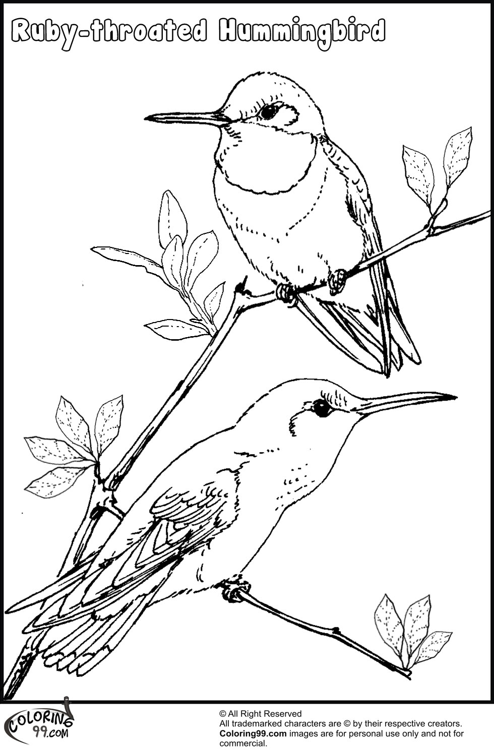 coloring pictures of hummingbirds hummingbird coloring pages team colors hummingbirds coloring pictures of