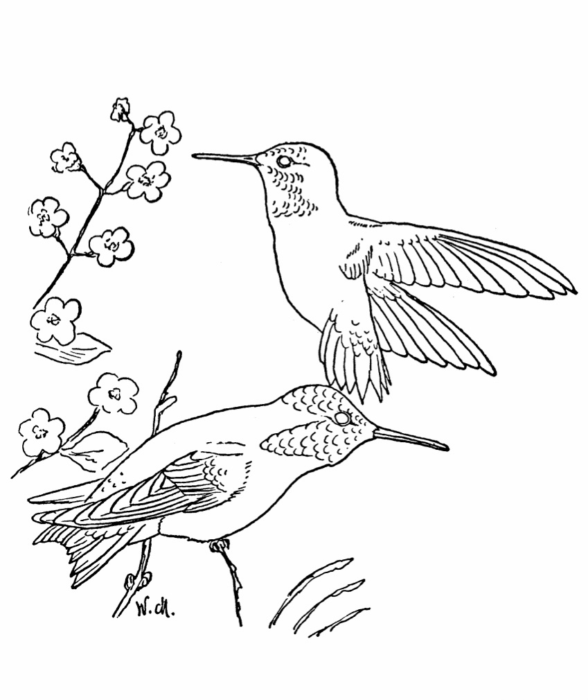 coloring pictures of hummingbirds hummingbird coloring pages to download and print for free coloring hummingbirds pictures of