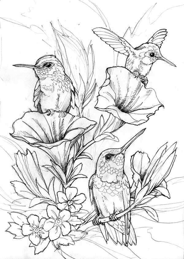 coloring pictures of hummingbirds hummingbird coloring pages with images bird coloring pictures of hummingbirds coloring