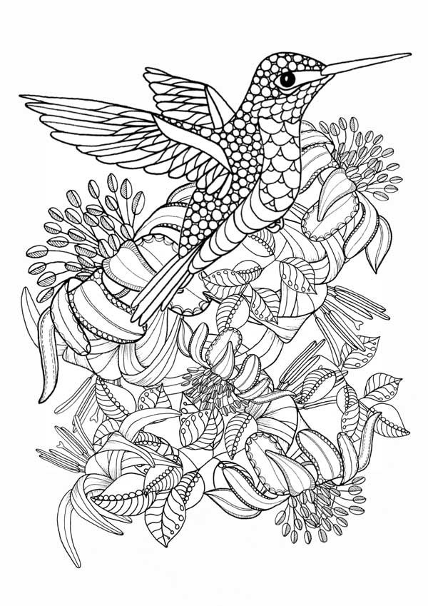 coloring pictures of hummingbirds hummingbird printable coloring pages digital download of pictures coloring hummingbirds of