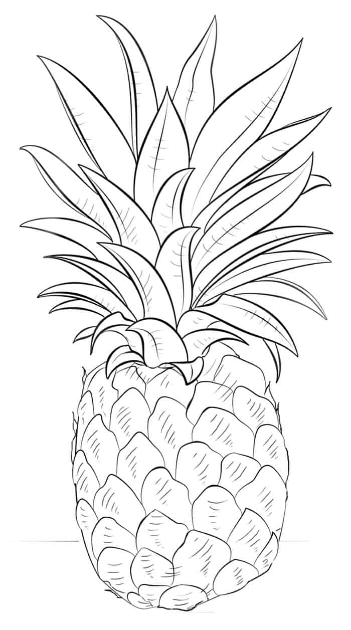 coloring pictures of pineapple a pale pernambuco pineapple coloring page download coloring pineapple of pictures