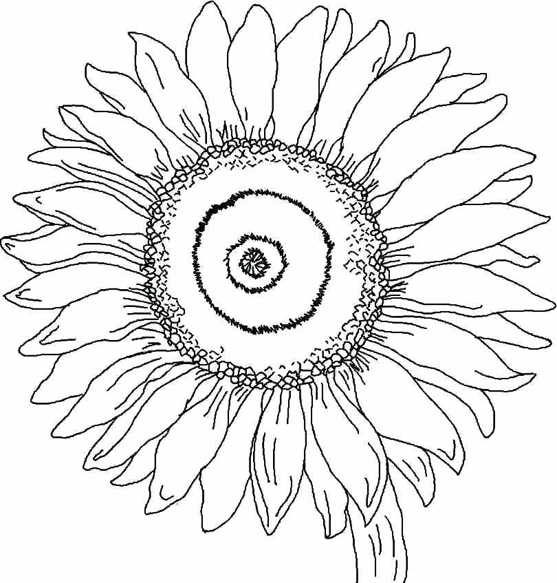 coloring pictures of sunflowers coloring pictures of sunflowers of coloring sunflowers pictures