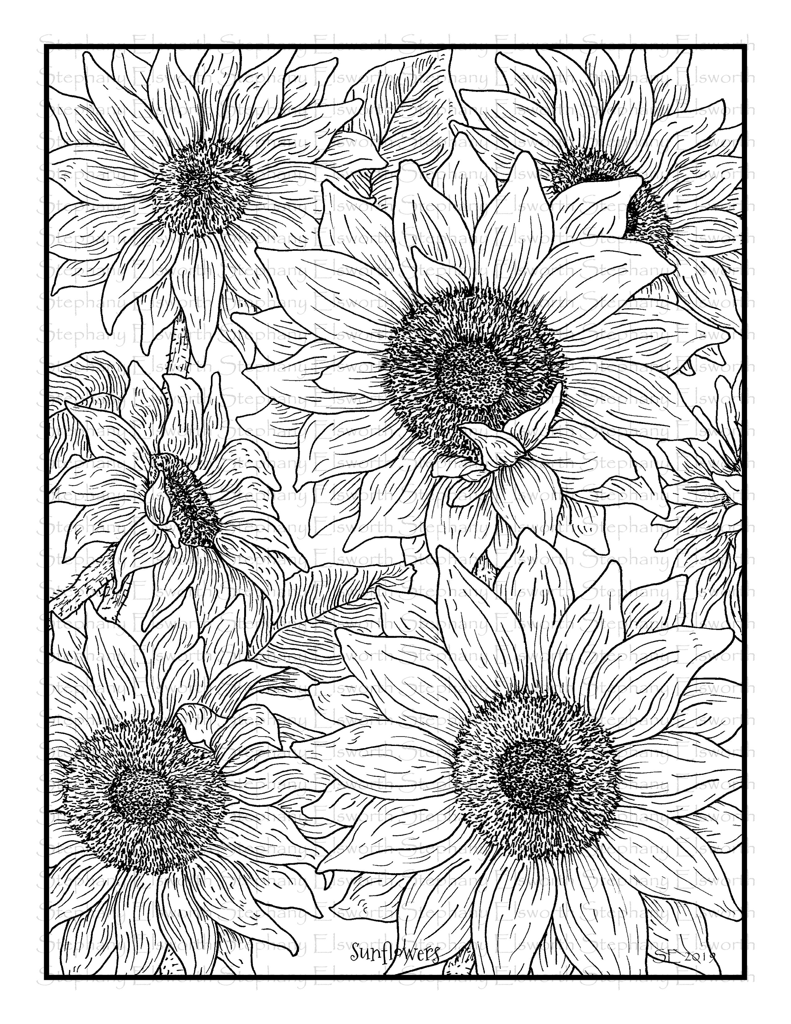 coloring pictures of sunflowers free photo sunflower silhouettes sky sunflowers sunflowers of coloring pictures