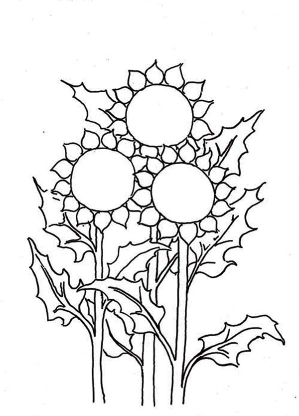 coloring pictures of sunflowers simple sunflower drawing at getdrawings free download of pictures sunflowers coloring