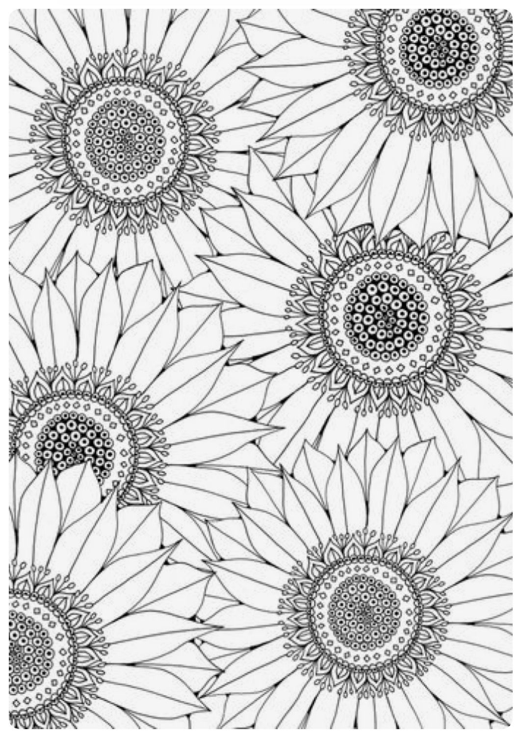 coloring pictures of sunflowers sunflower coloring pages to download and print for free pictures of sunflowers coloring