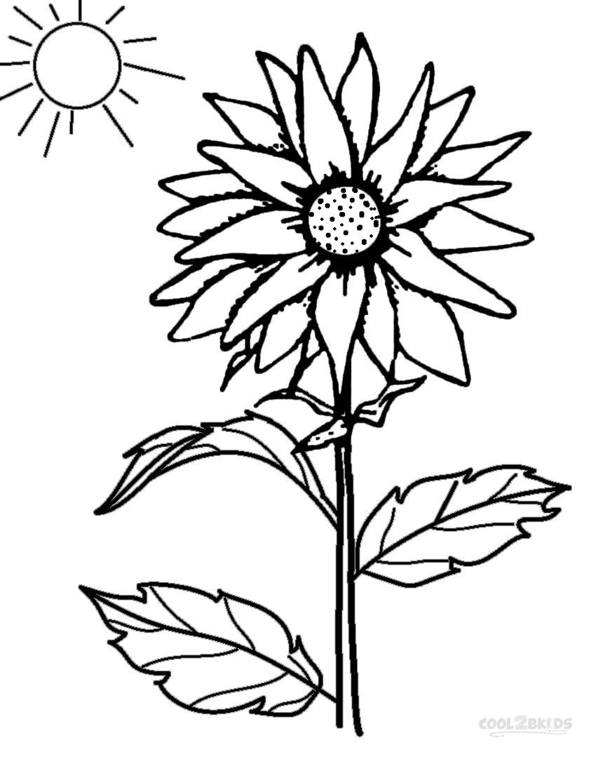 coloring pictures of sunflowers sunflower drawing simple at getdrawings free download of sunflowers pictures coloring