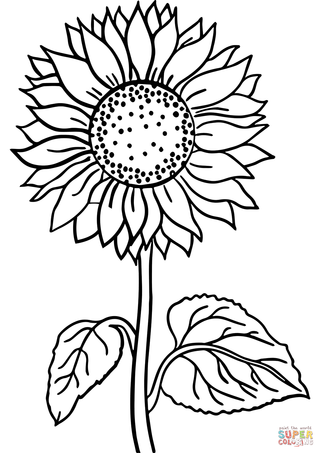 coloring pictures of sunflowers sunflowers clipart to color 20 free cliparts download coloring sunflowers of pictures