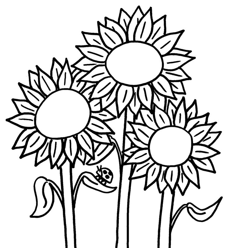 coloring pictures of sunflowers three sunflower coloring page download print online coloring sunflowers of pictures