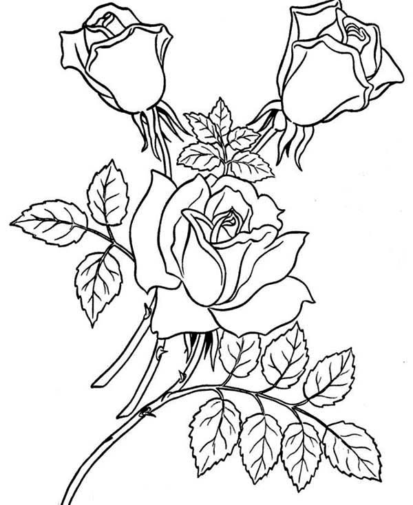 coloring roses rose flower for beautiful lady coloring page download roses coloring