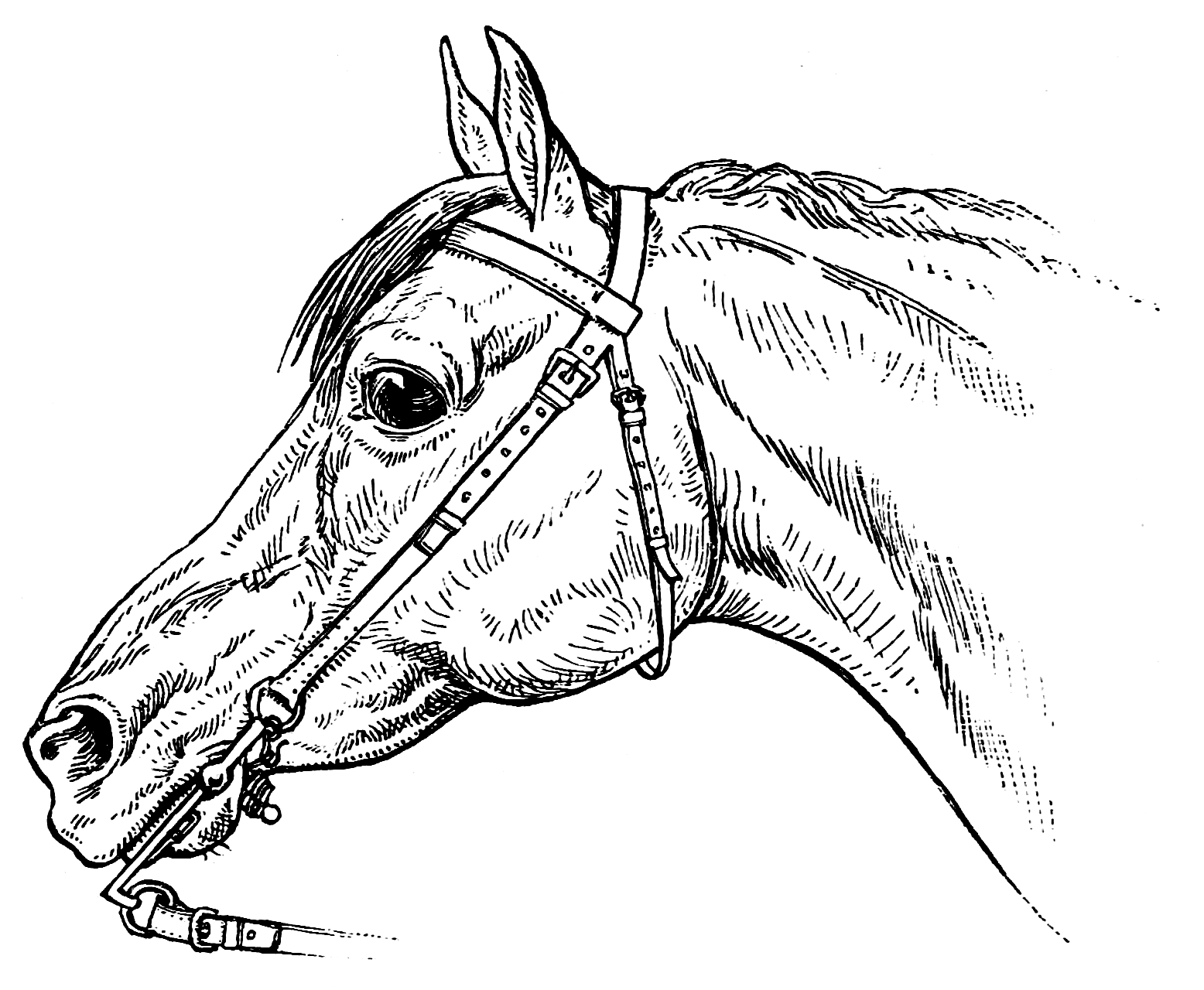 coloring sheet horse horse coloring page coloring home horse coloring sheet