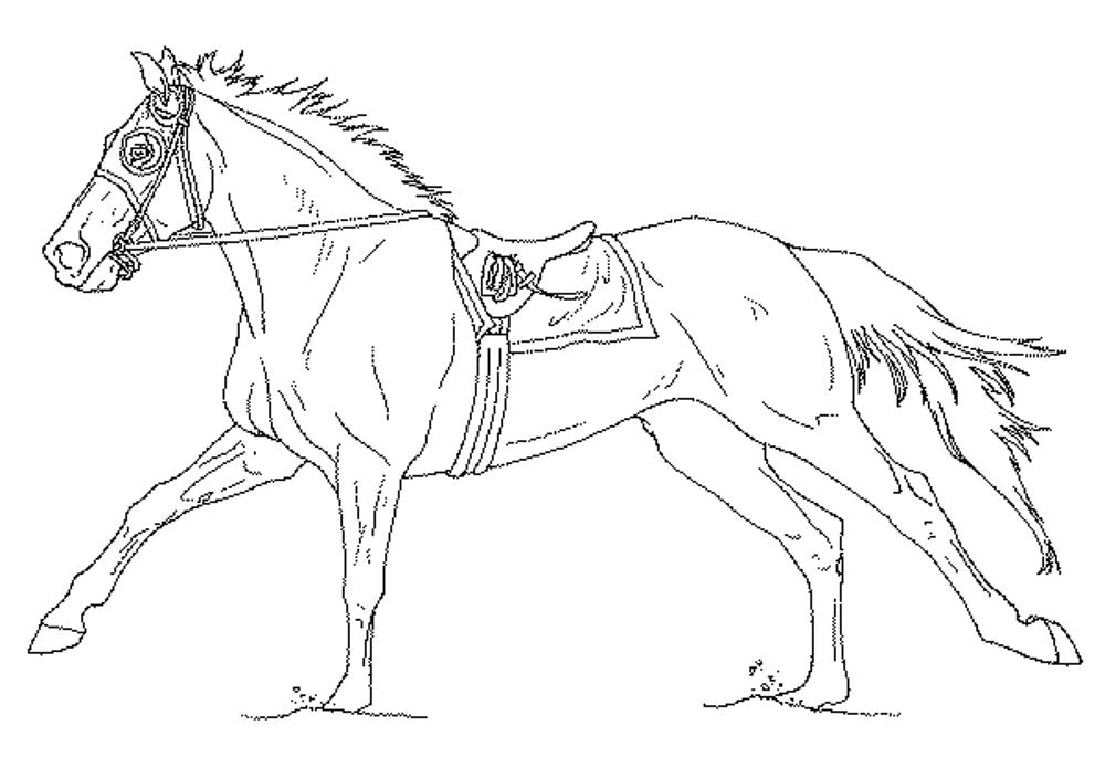 coloring sheet horse horse coloring pages for adults bestappsforkidscom sheet coloring horse