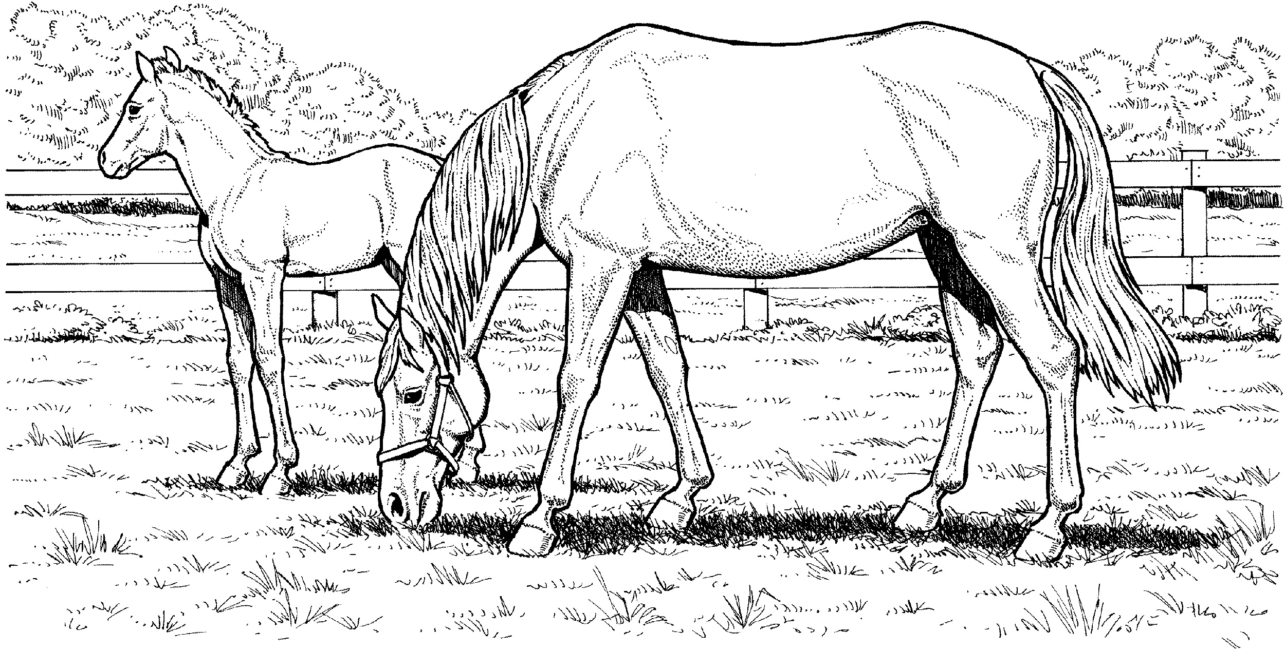 coloring sheet horse horse herd coloring pages at getcoloringscom free horse sheet coloring