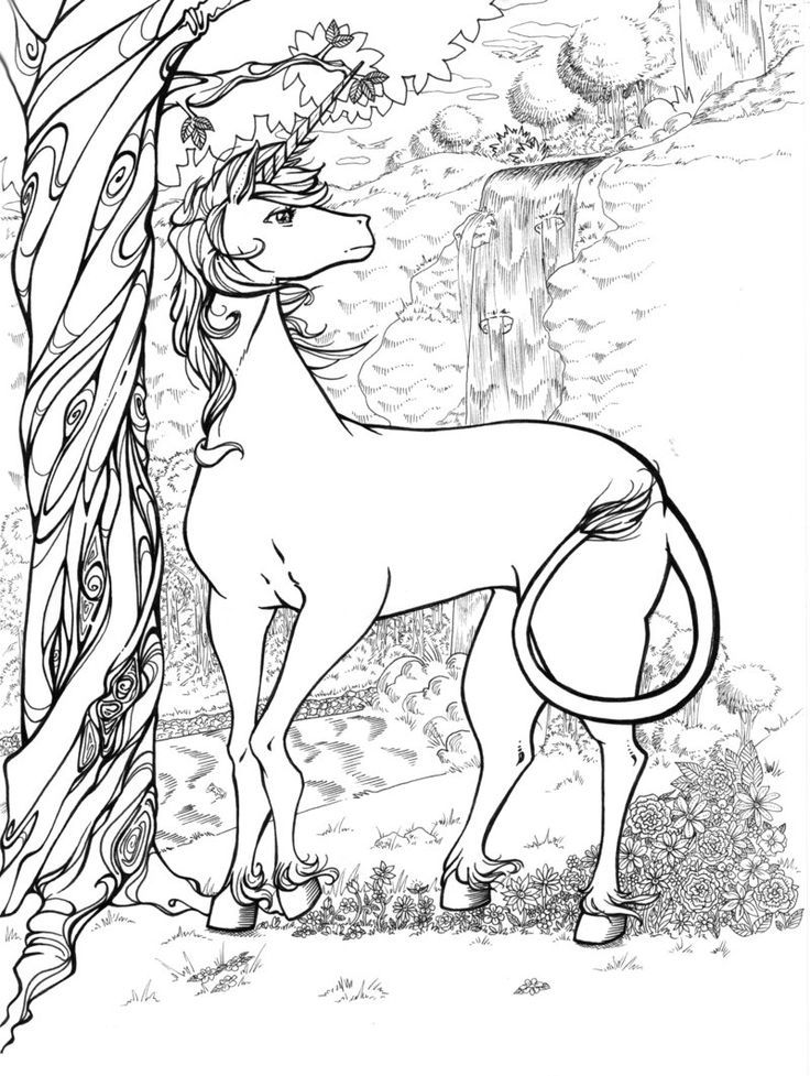 coloring sheet unicorn coloring pictures to print unicorn head unicorns adult coloring pages unicorn coloring coloring sheet pictures to print