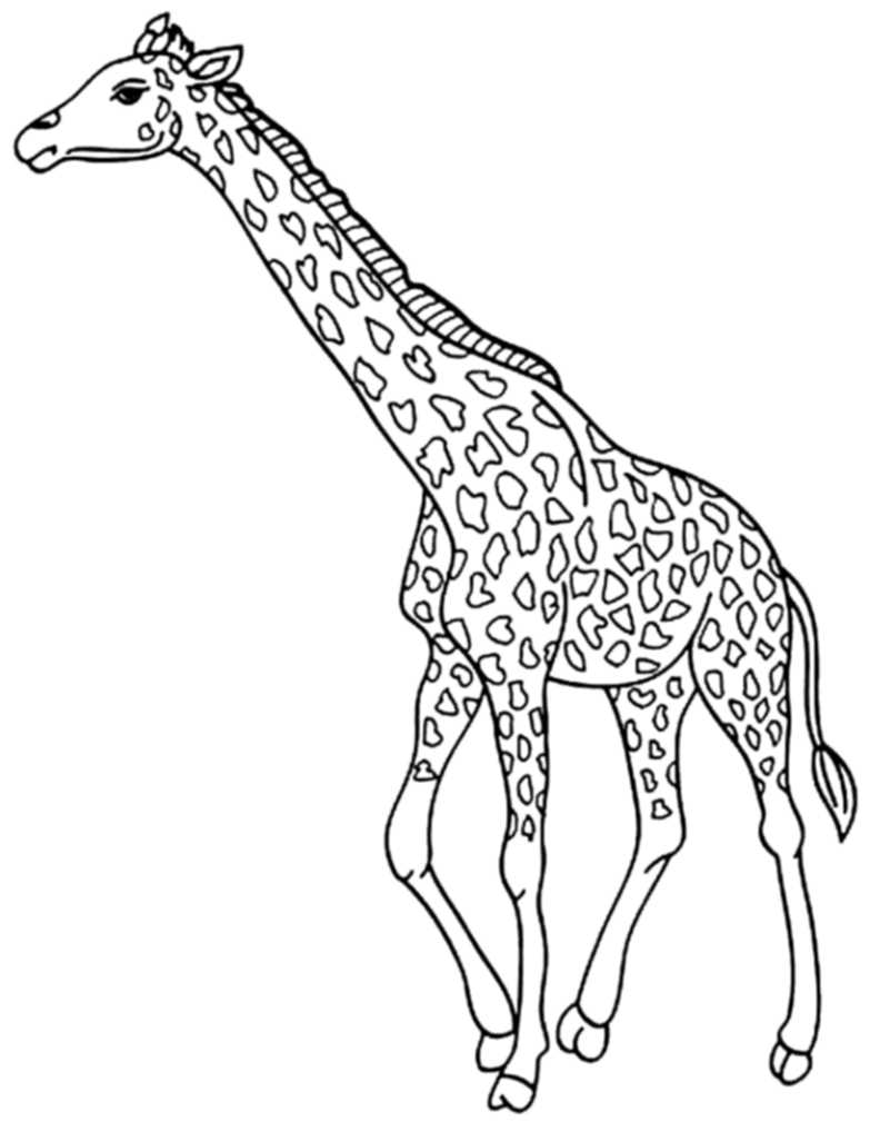 coloring sheets giraffe print download giraffe coloring pages for kids to have fun giraffe coloring sheets