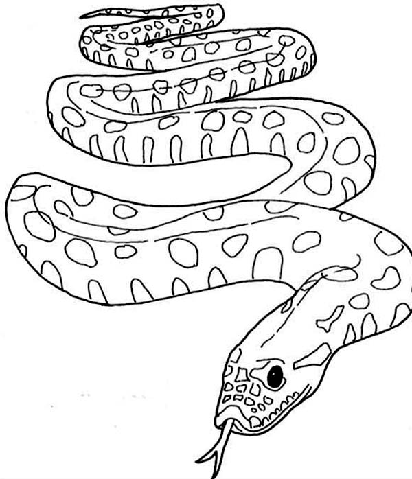 coloring snake pages collection of fantastic snake coloring pages stpetefestorg coloring snake pages