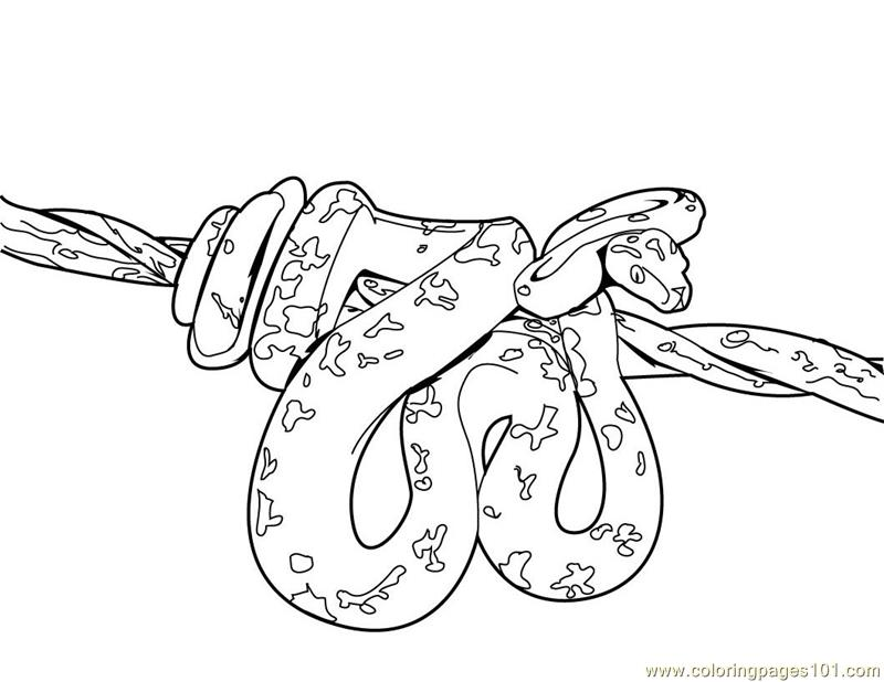 coloring snake pages free snake coloring pages for adults printable to coloring pages snake