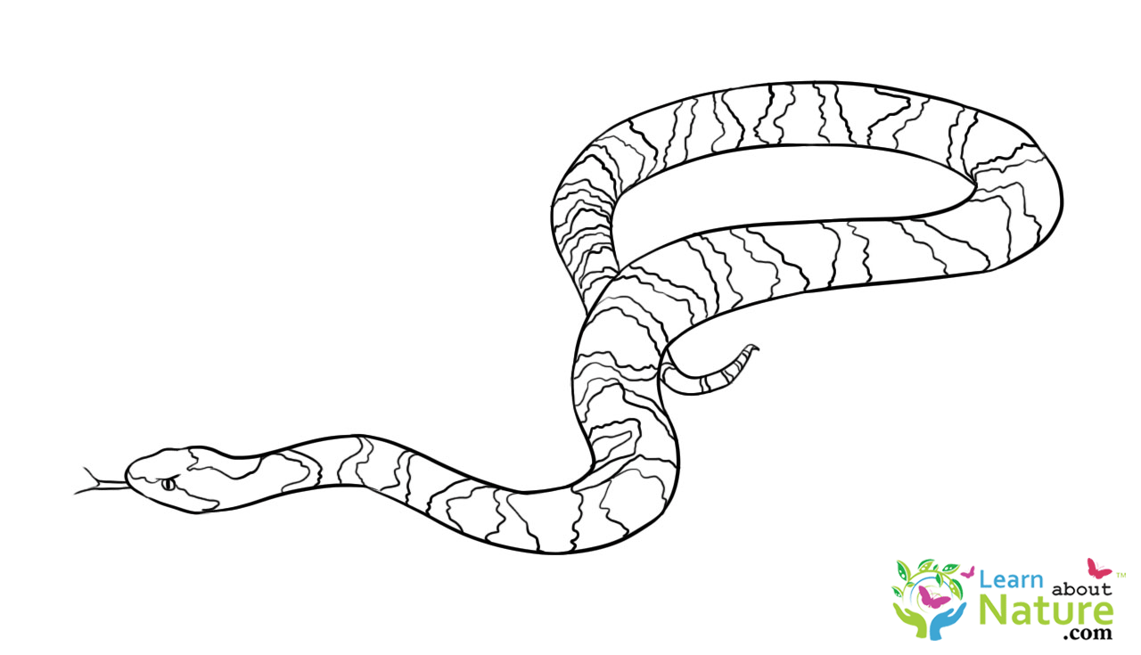 coloring snake pages snake coloring pages getcoloringpagescom coloring pages snake