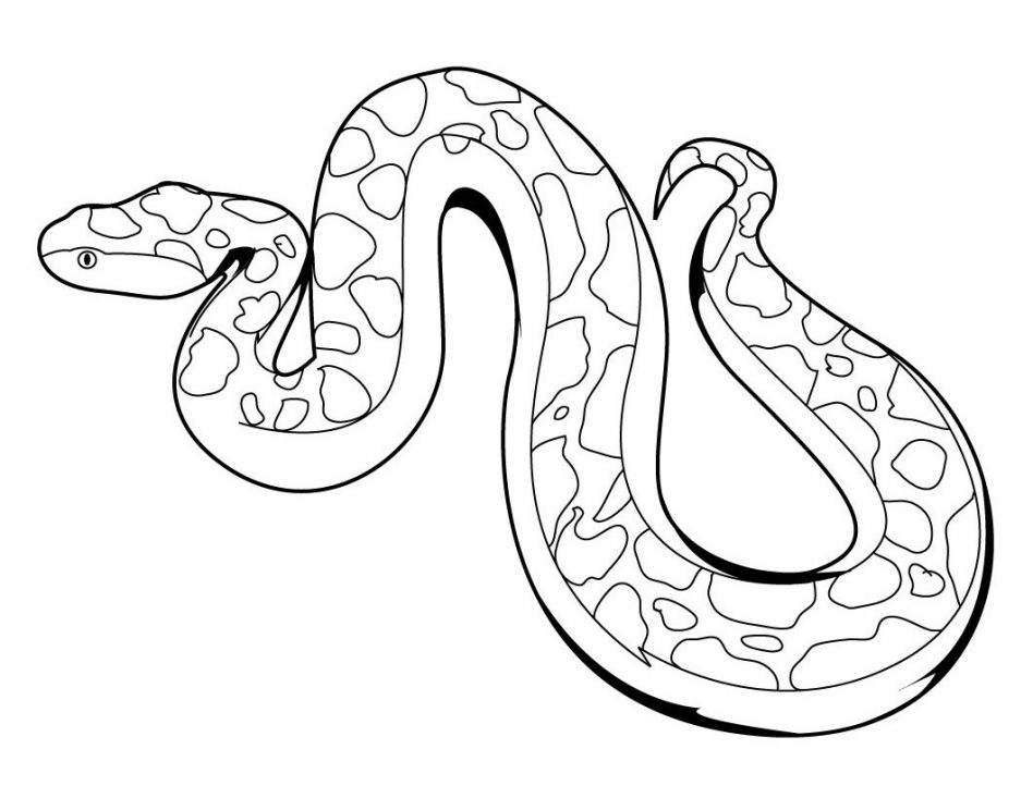 coloring snake pages viper snake coloring pages at getcoloringscom free coloring pages snake