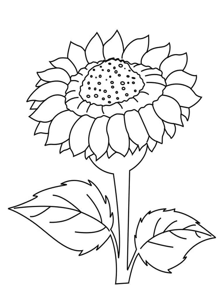 coloring sunflower printable sunflower coloring page getcoloringpagescom coloring sunflower printable