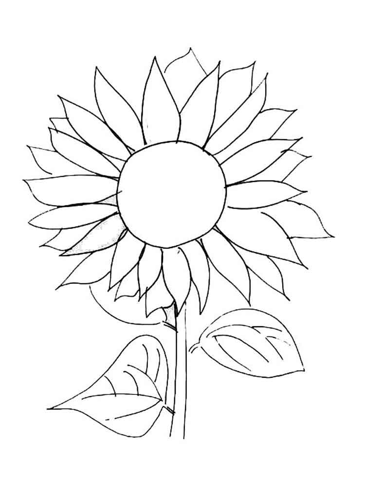 coloring sunflower printable sunflower coloring page getcoloringpagescom printable sunflower coloring