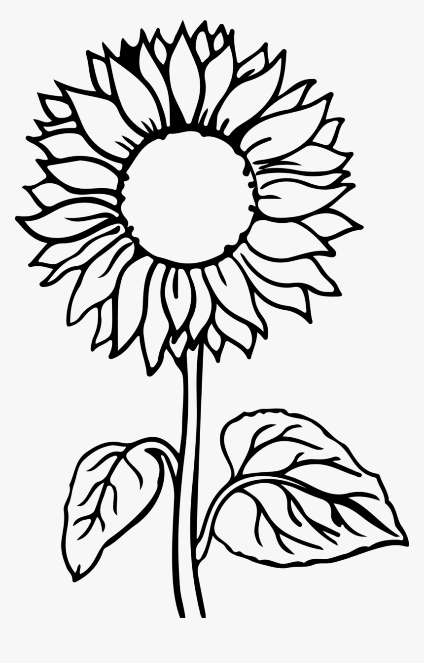 coloring sunflowers printable coloring pages sunflowers that are sizzling horton blog printable sunflowers coloring