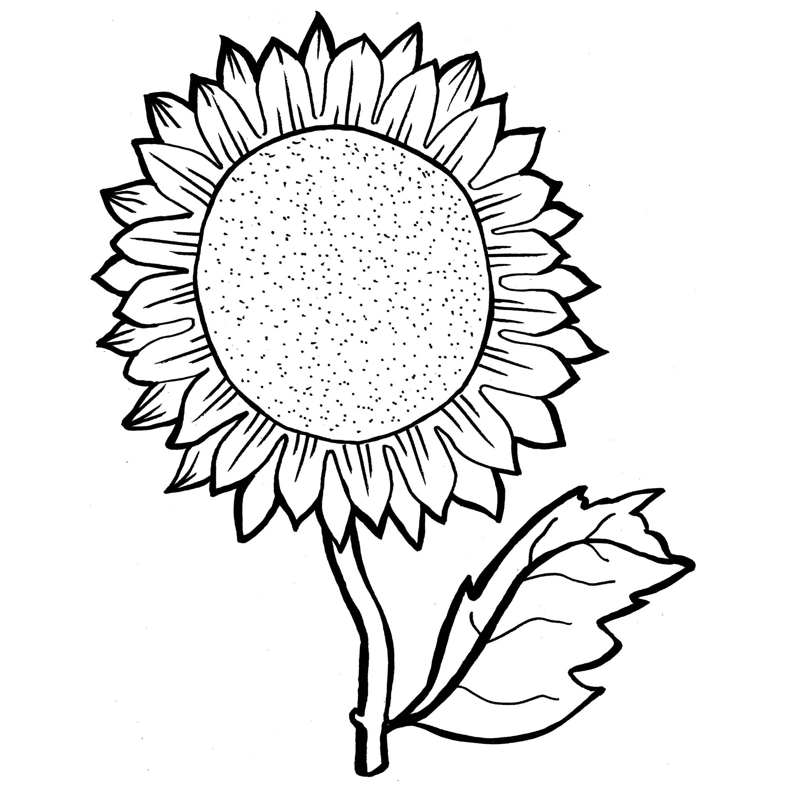 coloring sunflowers printable sunflower coloring page at getdrawings free download coloring printable sunflowers