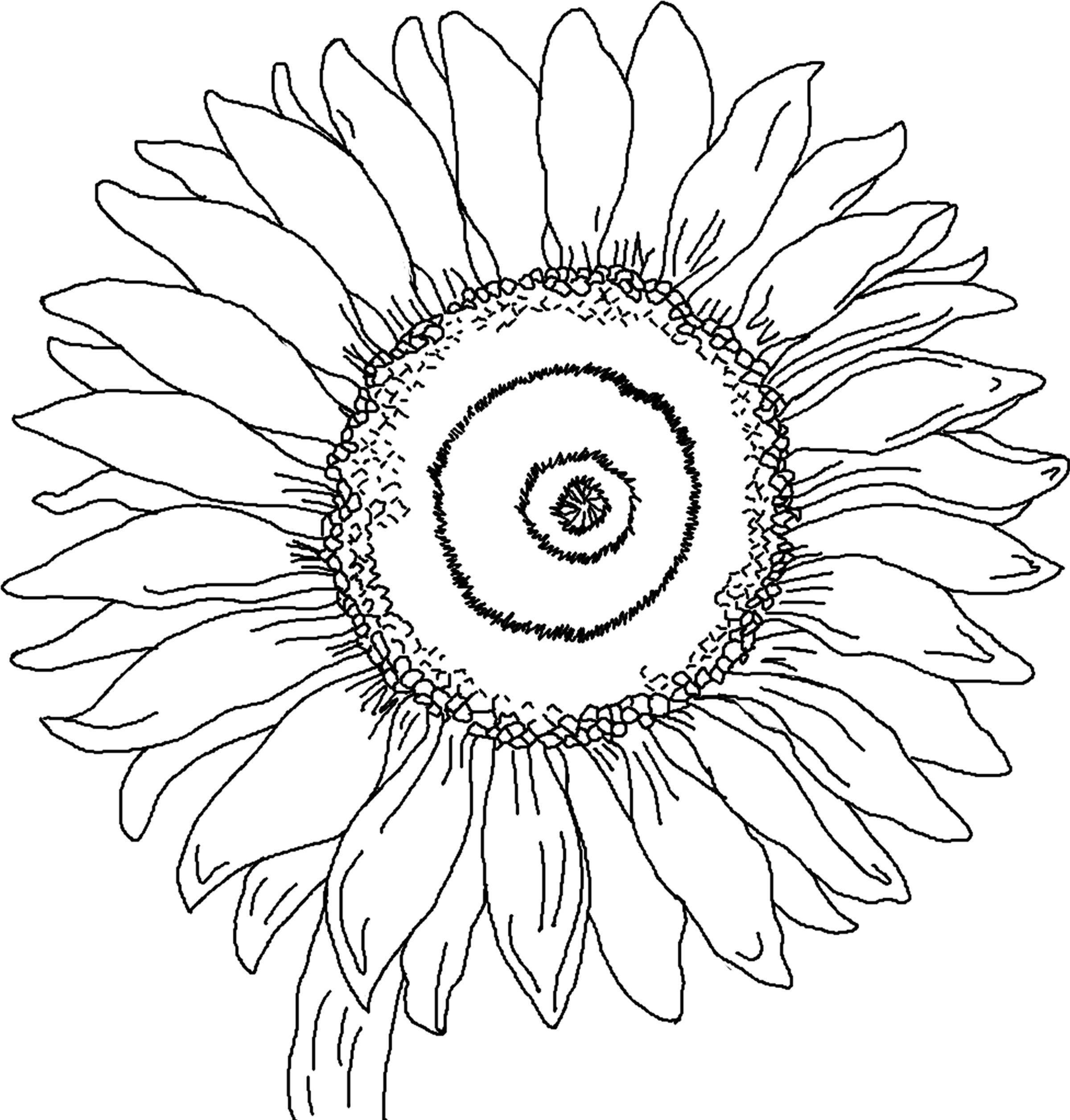 Coloring sunflowers printable