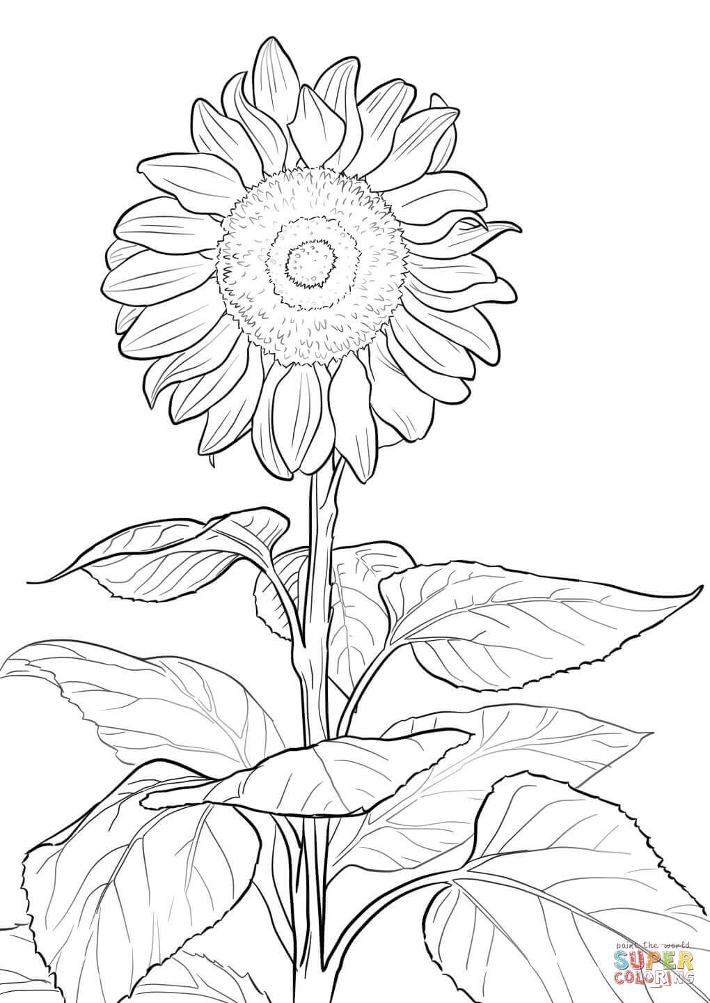 coloring sunflowers printable sunflower coloring sheet coloring sheets for young adults printable sunflowers coloring