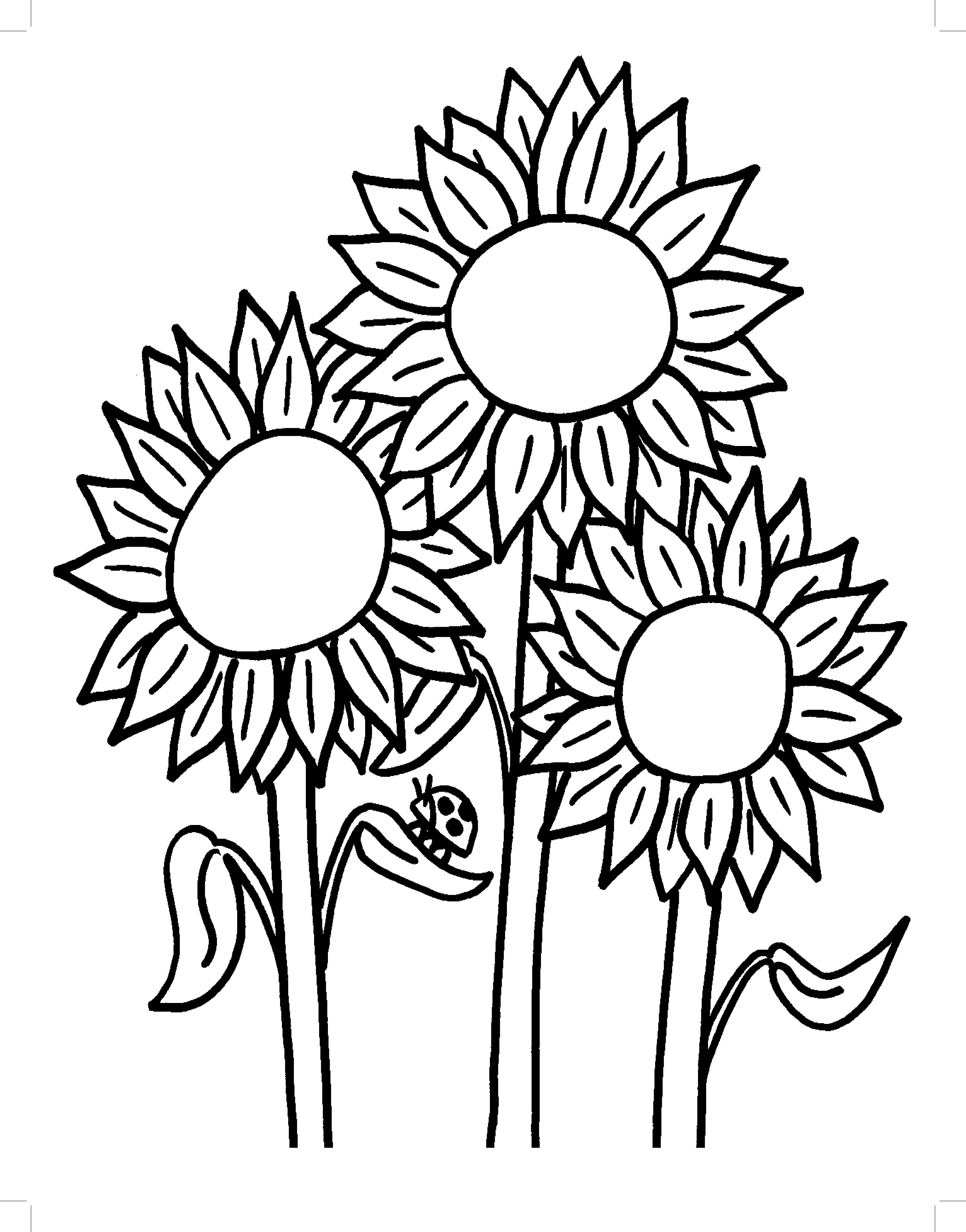 coloring sunflowers printable sunflower is blooming coloring page download print sunflowers printable coloring