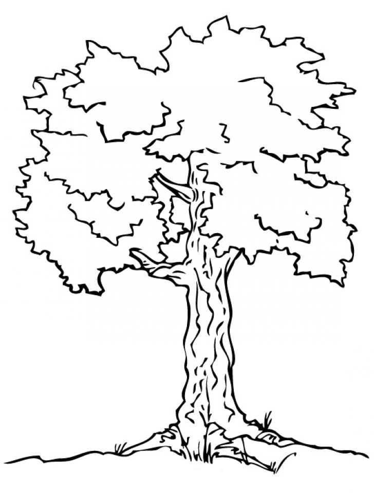 coloring tree kindergarten bare tree coloring page tree pattern without leaveslots kindergarten coloring tree