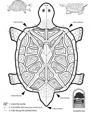 coloring turtle parking many three year olds have trouble staying within the lines coloring parking turtle