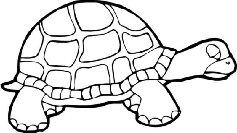 coloring turtle parking pattern baby turtle coloring pages dibujo de tortuga parking coloring turtle