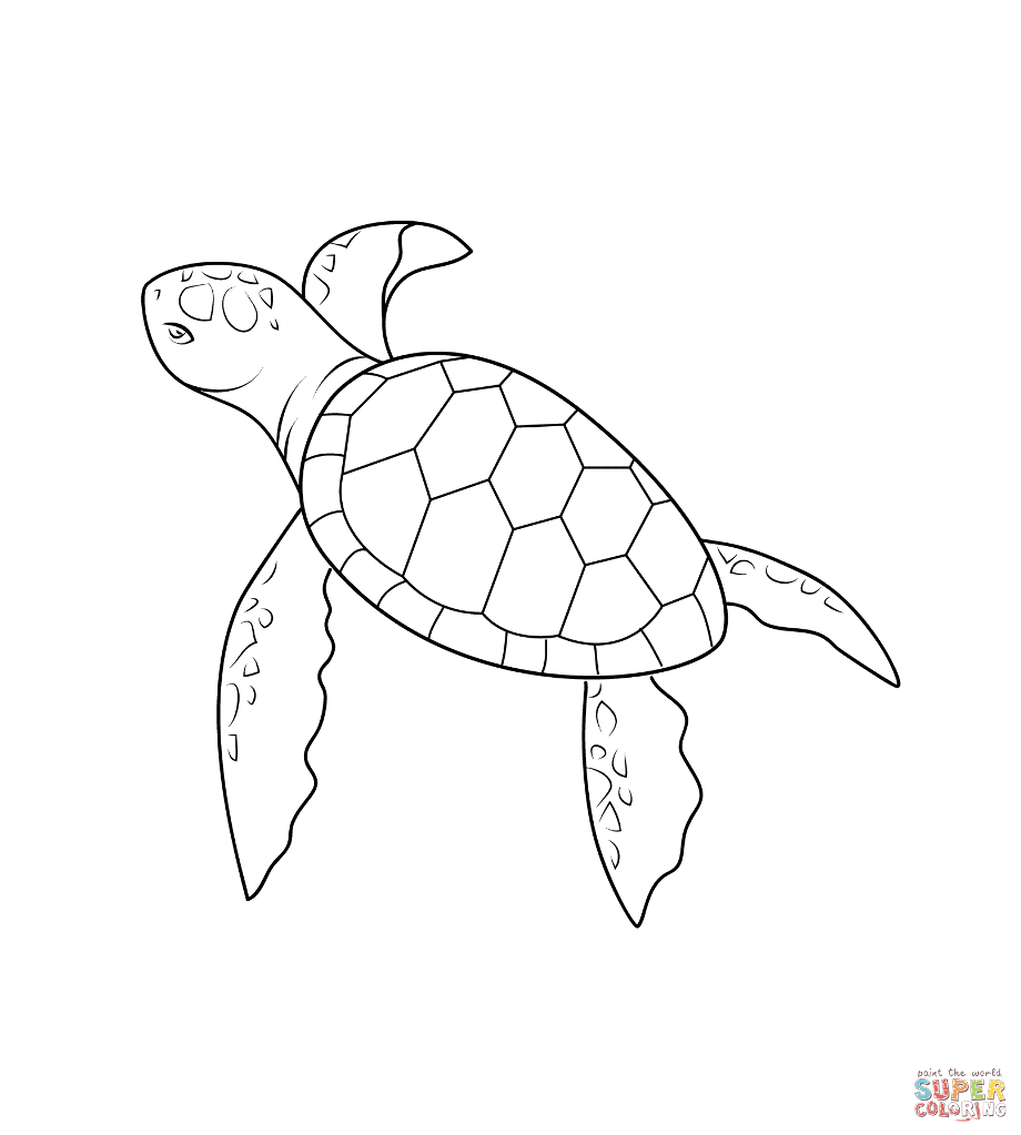 coloring turtle parking pin on turtle coloring page turtle coloring parking