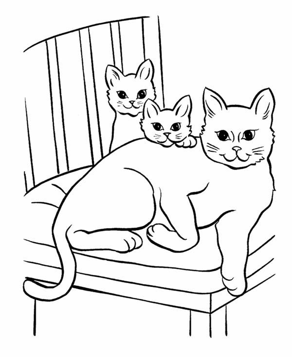 coloring worksheets cat pet cat and twi little kitten coloring page coloring sky cat coloring worksheets