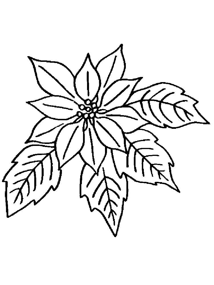 colouring flowers pictures 10 cool coloring pages free premium templates pictures flowers colouring