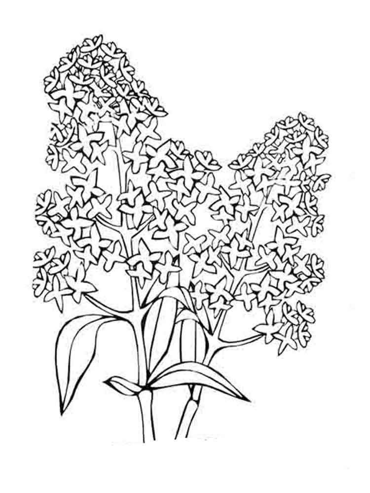 colouring flowers pictures coloring clipart flower coloring flower transparent free pictures flowers colouring
