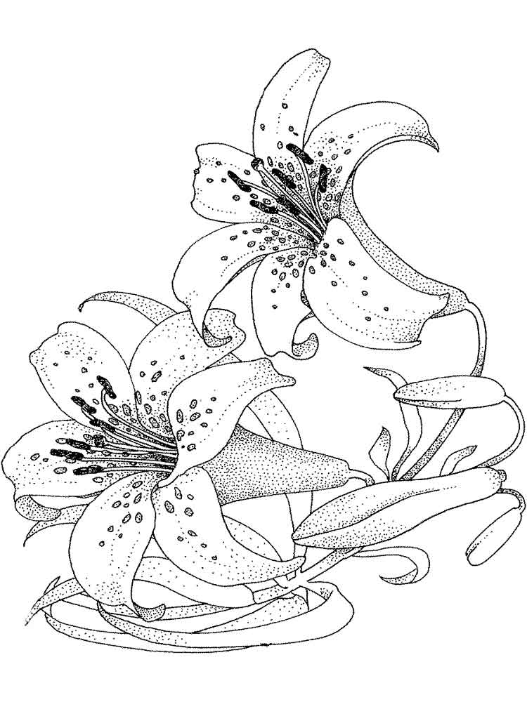 colouring flowers pictures flower coloring pages 3 coloring pages to print colouring flowers pictures