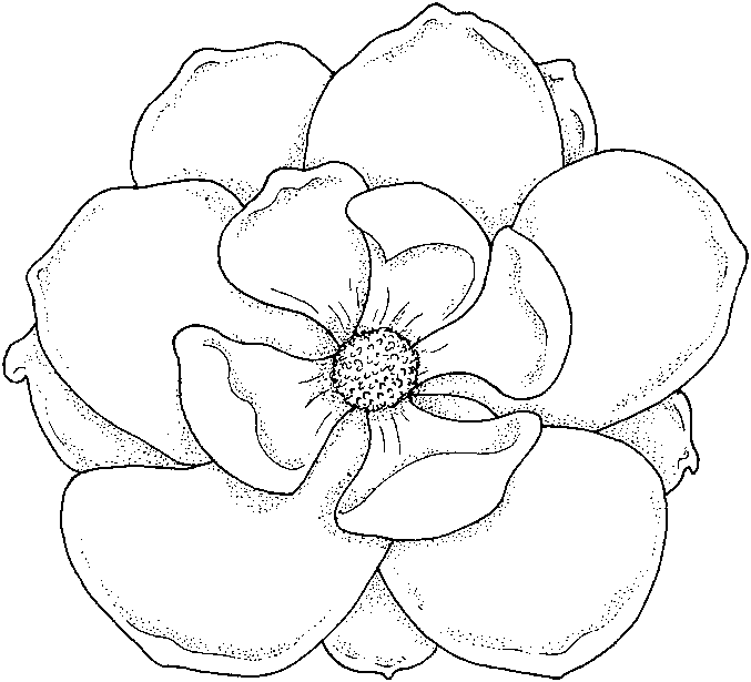 colouring flowers pictures flower garden coloring pages to download and print for free pictures flowers colouring