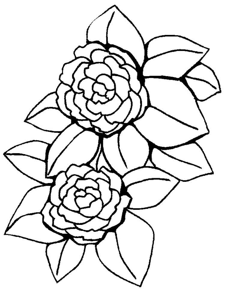 colouring flowers pictures peony coloring page at getcoloringscom free printable colouring flowers pictures