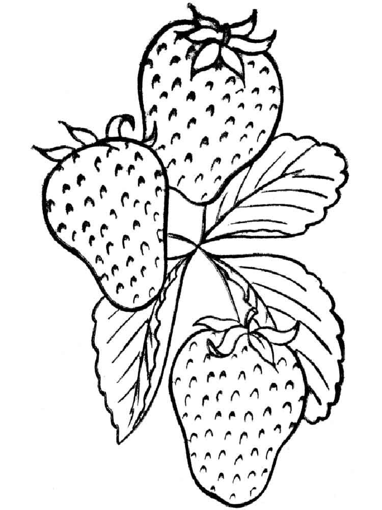 colouring pages of strawberry fresh strawberry coloring pages fantasy coloring pages colouring strawberry of pages