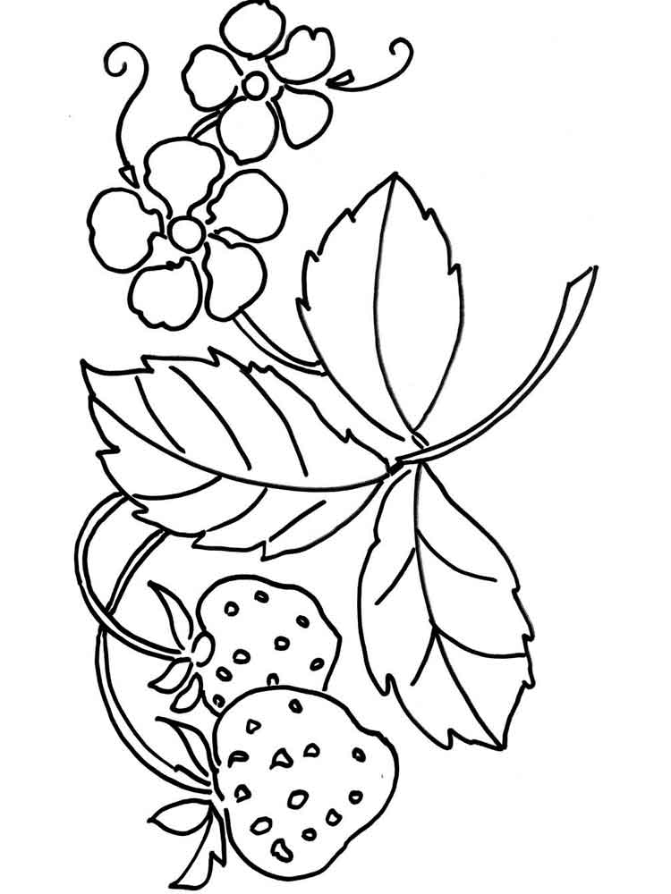 colouring pages of strawberry strawberries coloring pages coloring pages to download strawberry colouring pages of