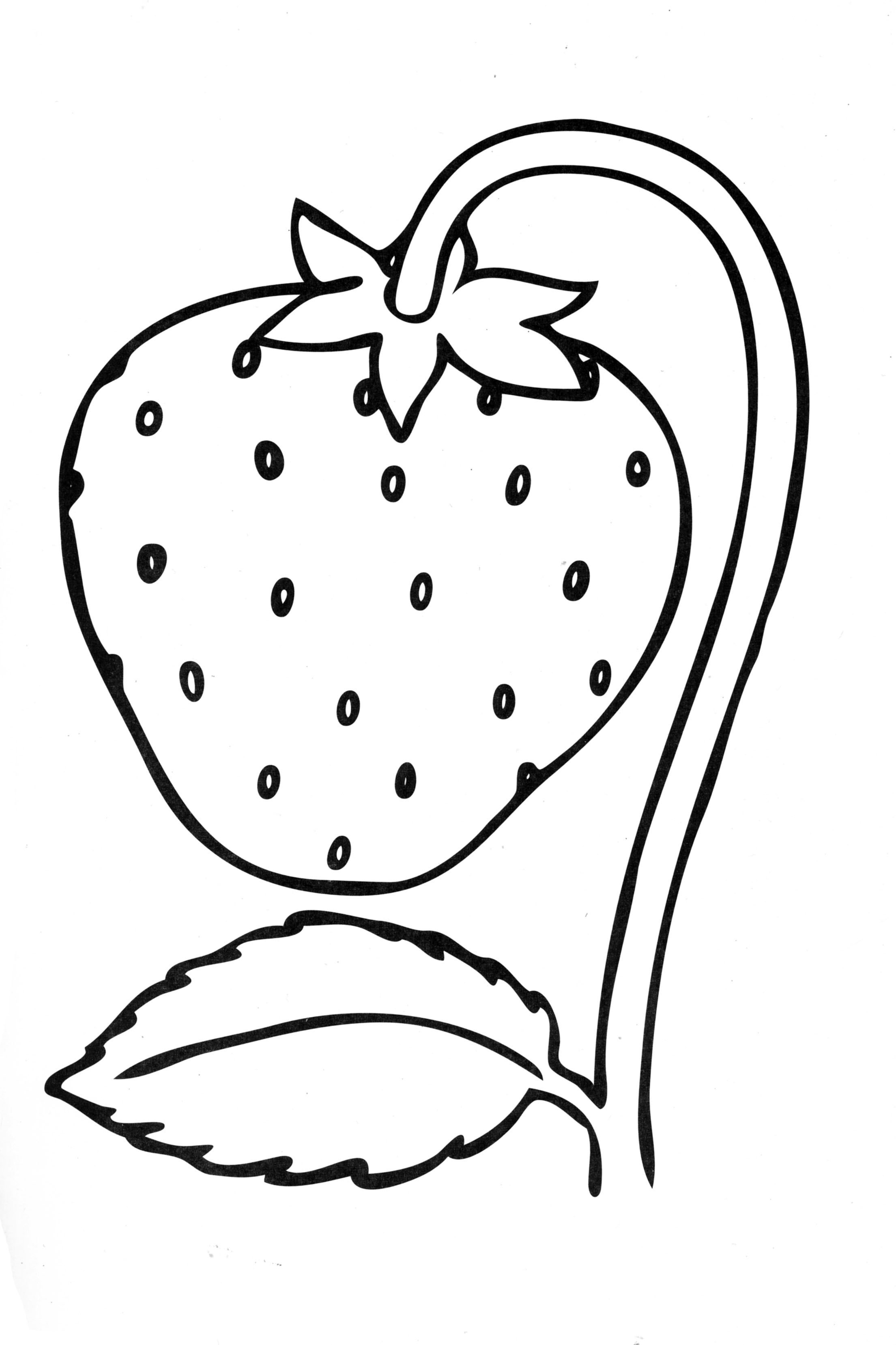 colouring pages of strawberry strawberry coloring page at getcoloringscom free pages strawberry colouring of