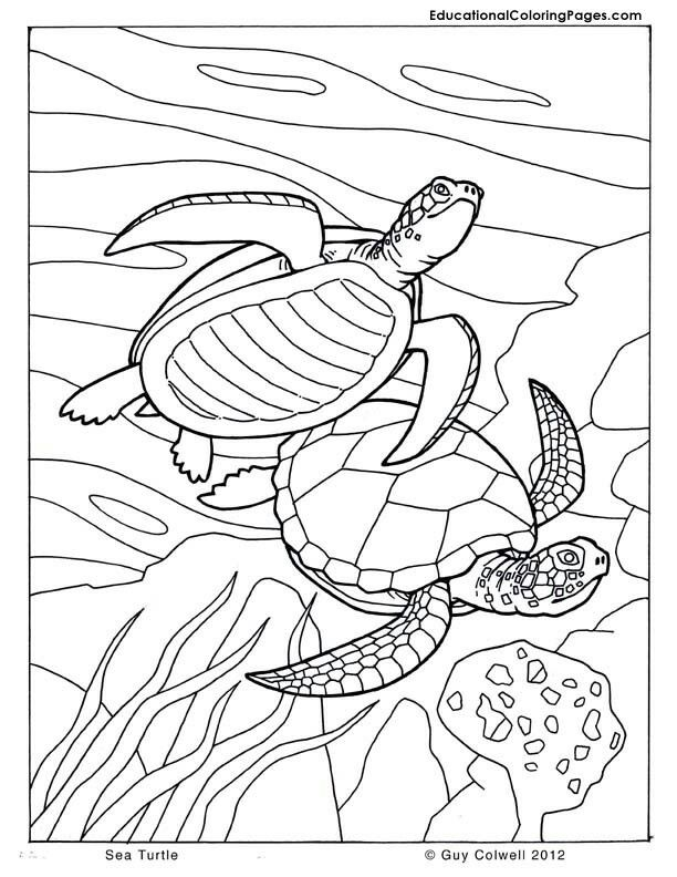 coqui coloring page coqui coloring page at getdrawings free download page coqui coloring