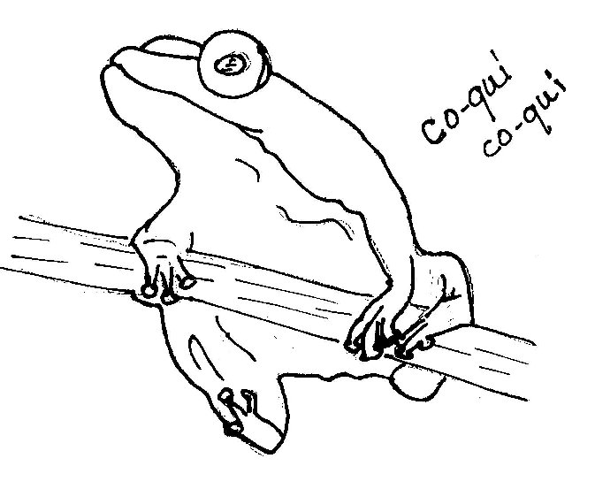 coqui coloring page coqui drawing free download on clipartmag coloring coqui page