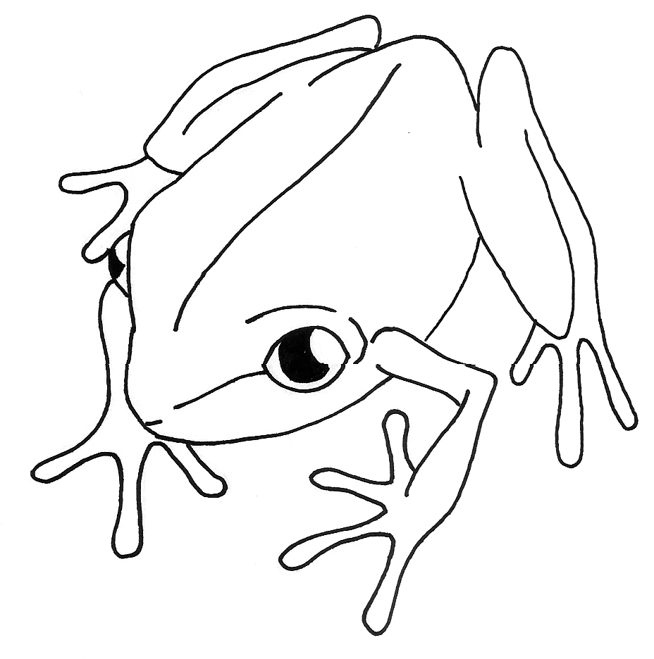 coqui coloring page coqui frog drawing at paintingvalleycom explore coqui coloring page